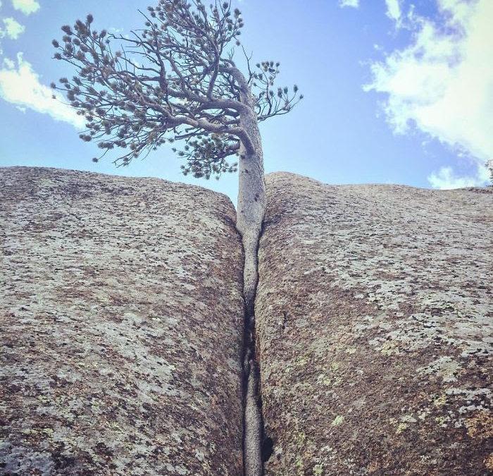 The Tenacity of Trees